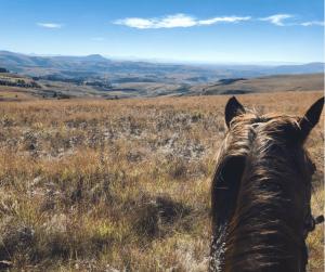 Horse Riding Champagne Castle Drakensberg