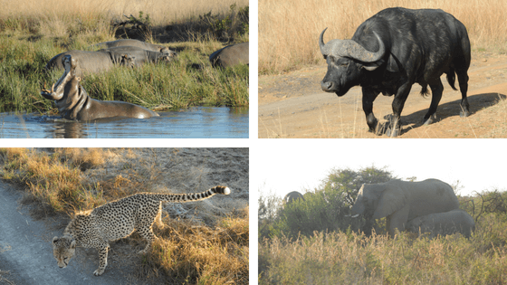 Animals At Nambiti Private Game Reserve South Africa