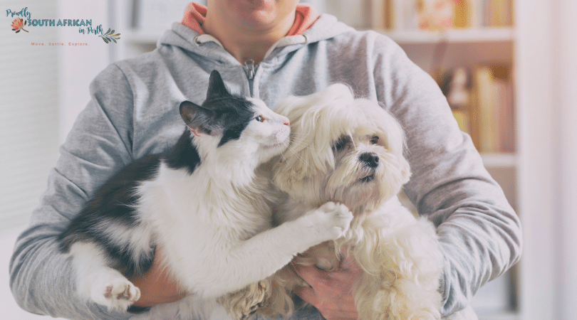 Moving Your Pets To Australia - person holding a cat and a dog